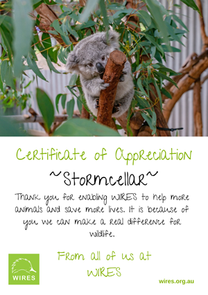 wires-130320-e-Certificate---Stormcellar.png